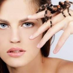 la-phobie-des-araignées